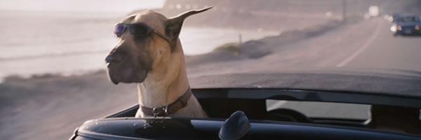 10 Best Dog Movies on Netflix